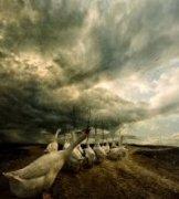 十一步作品《天鹅之旅》