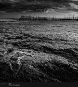 十一步作品《最后的湿地6》