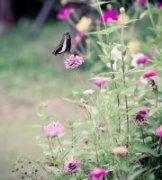 甲壳虫作品《花开季到了》