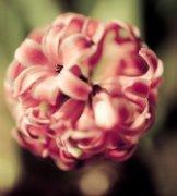 隽作品《花团锦簇》