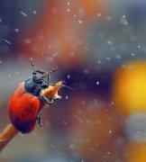 歌德密斯作品《它说风雨中那点痛算什么》