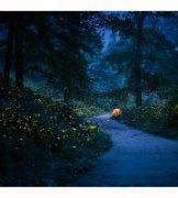 lake江湖作品《森林里的狂欢》