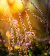 摄影师鑫荣作品《向着阳的希望》
