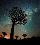 GUOZHIYUN作品《走进纳米比亚之箭袋树》