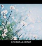 烨: 顶级电影截图艺术图片欣赏 苏稚